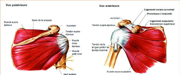 Le MEILLEUR EXERCICE EPAULE en musculation - Rudy Coia